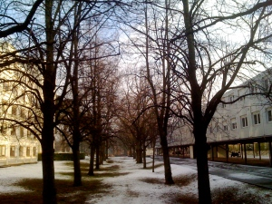 After the snowfall, outside my office